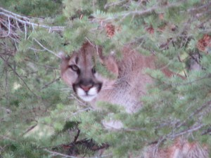cat hunt 002