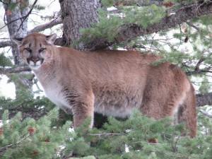 cat hunt 045